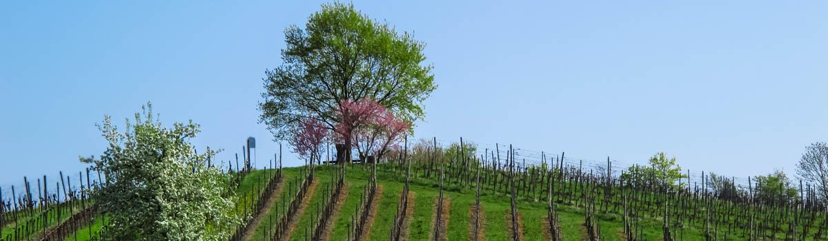 TraumRunde Wiesenbronn Schiller im Frühling