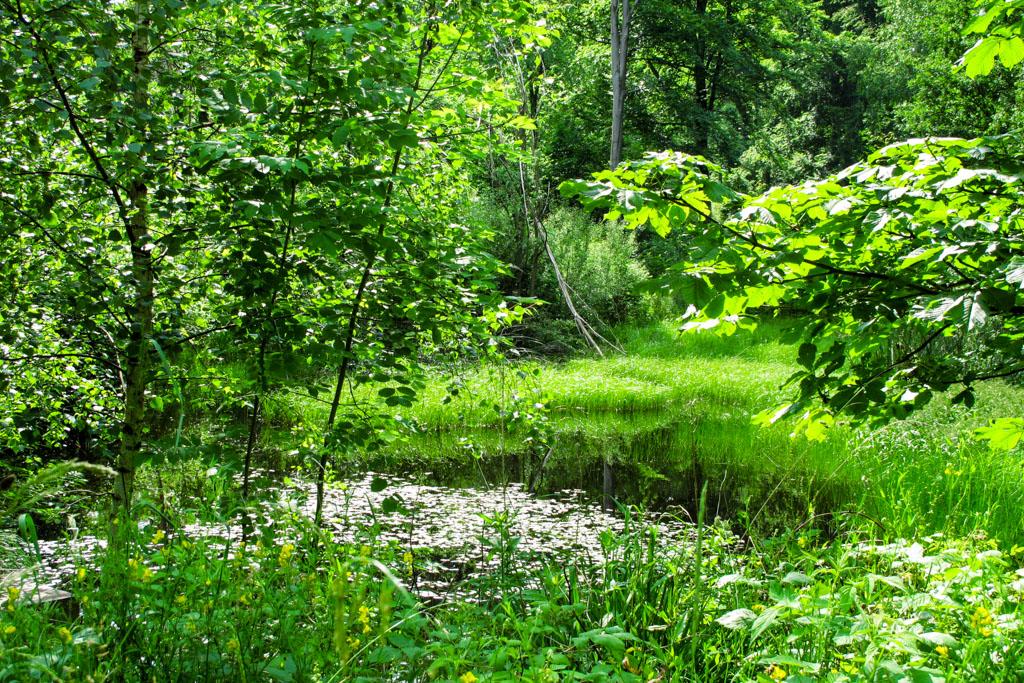 Wiesenbronn-Birklingen Tümpel im Wald
