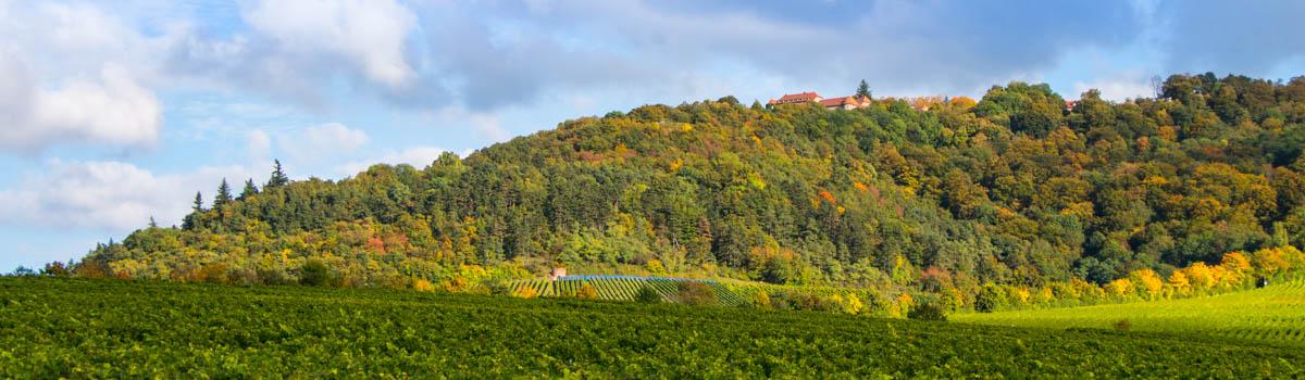 Alter Schwanbergweg - Herbstlicher Schwanberg