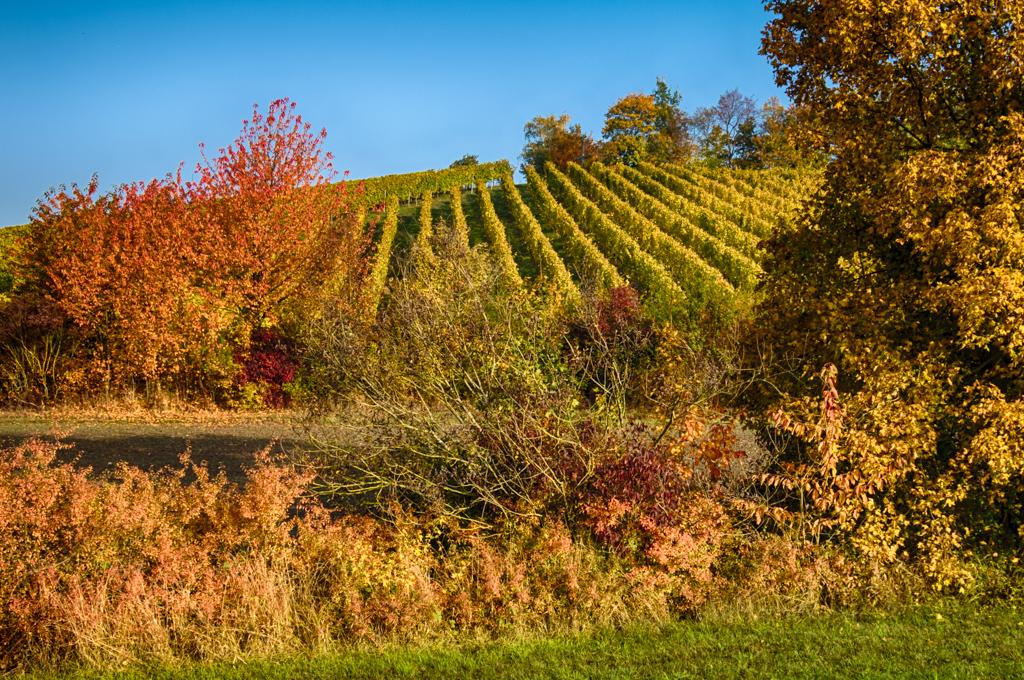 Herbstfarben am Geisberg