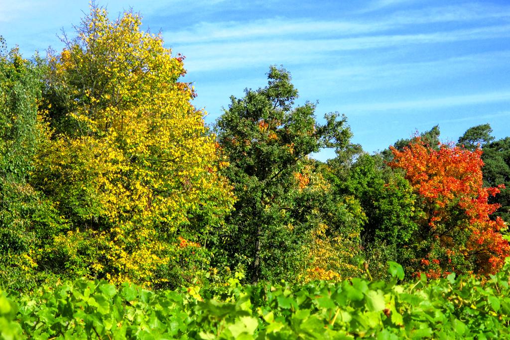 Wutschenberg in Herbstfarben