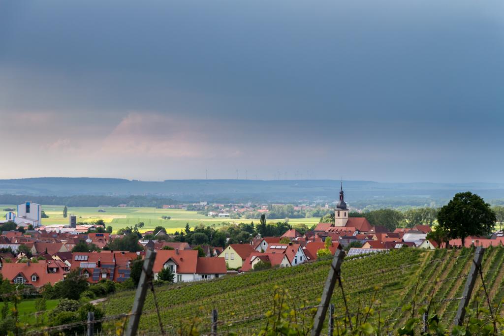 Weinbergpfirsich - Farbtupfer in der Landschaft