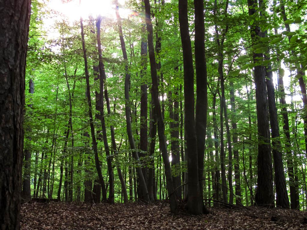 W2 Wald im satten Grün