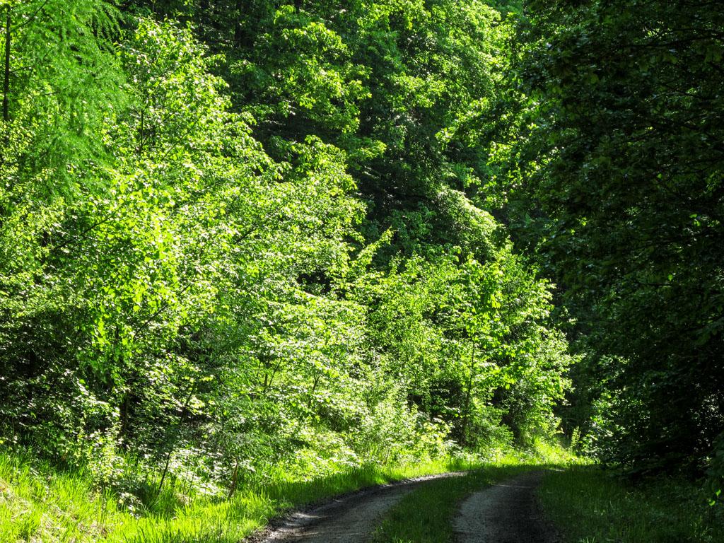 Wanderweg W1 - Mittelhangweg