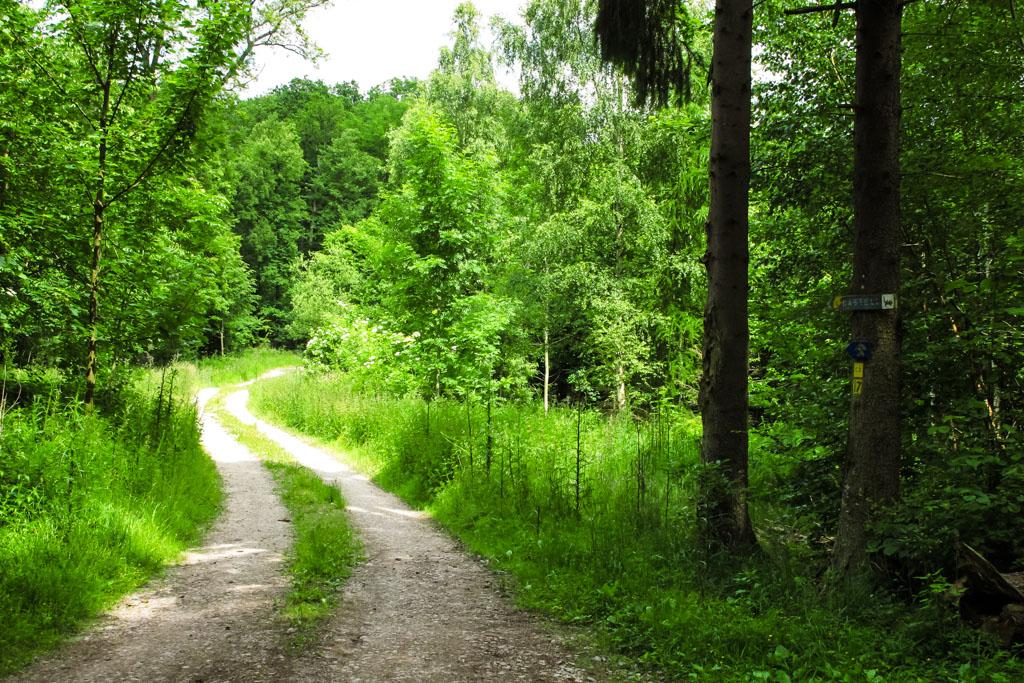 Wiesenbronn-Birklingen Lichter Waldweg