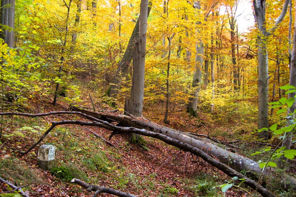 Alter Schwanbergweg - Waldweg