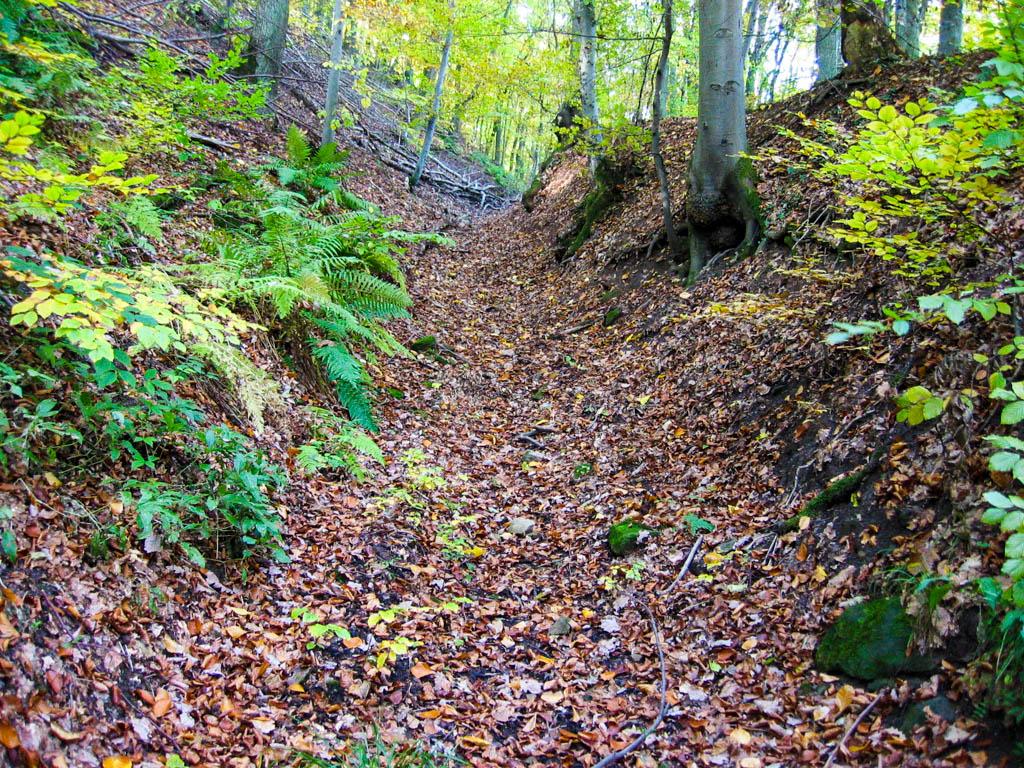 Alter Schwanbergweg - Waldweg Steige