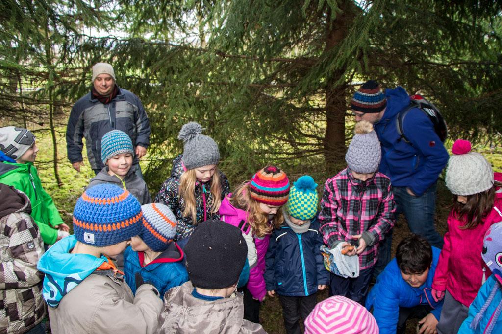 Geisberbwichtel im Weihnachtswald
