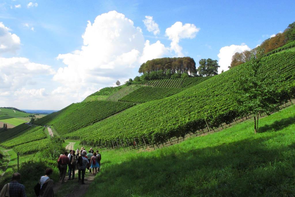 Castell Weinberge am Schlossberg