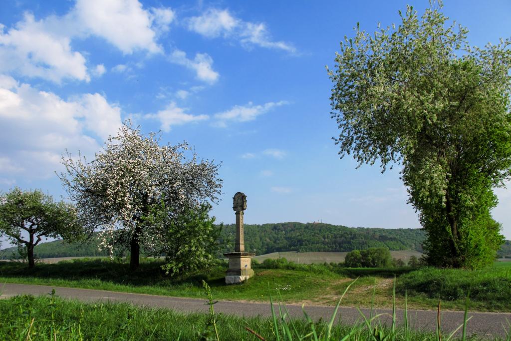 Kiliansberg - Steinmarter mit Schwanberg im HG